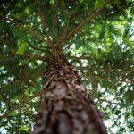 Dia da árvore – a importância das árvores para os recursos hídricos